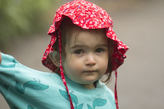 (louisa_catlover) Tags: mttomahbotanicgardens botanicgarden mounttomah royalbotanicgardenmounttomah bluemountains nsw australia summer rainy misty wet outdoor nature foggy portrait family child toddler daughter tabitha tabby