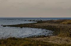 Afternoon at the Hittarp reef (frankmh) Tags: landscape coast shore reef water sea seascape hittarp helsingborg skåne öresund