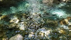 Aguas Cristalinas - Vodudahue (Patagonia Chile) (Noelegroj (Celebrating 10 Millions+views!)) Tags: chile patagonia vodudahue fiordocomau water agua pond lagoon laguna pristine crystalclear aguastransparentes nature naturaleza pumalin rutadelosparquesdelapatagonia carreteraaustral travel viaje