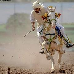 tent pegging (TARIQ HAMEED SULEMANI) Tags: sulemani supershot sensational tariq tourism trekking tariqhameedsulemani travel tentpegging riders horses horse culture
