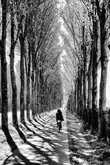 Cycling (robarnhem) Tags: trees girl bike monochrome light shadow