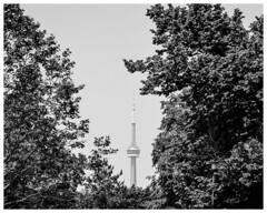 CN Tower Toronto (nickyt739) Tags: city cityscape black white bw noir monochrome canada north america architecture cn tower trees landscape nikon dslr d5100 amateur