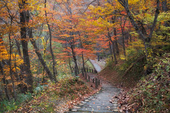 Where the path takes you (jasohill) Tags: 2018 autumn october color tohoku nature nationalpark city quiet iwate red leaves changes light photography sliver hachimantai trees towada life japan fall