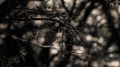 Tela de Araña entre Ramas (Martin Antolin PH) Tags: trees tree arbol contraste paisaje landscape great nature natural naturaleza ramas sunset sunrise atardecer highcontrast altocontraste contraluz color sky pink orange