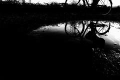 P8270869 puddle (soyokazeojisan) Tags: japan osaka city people bw blackandwhite grass water monochrome digital olympus em1markⅱ 714mm bicycle