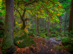 Enchanted... (Lee Harris Photography) Tags: wood woodland autumn orange foliage light outdoor rock tree branches leaves landscape colourful