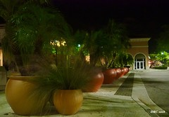 Palms in Pots - Coconut Point Mall (DRC - THANKS!! 3 Million Views) Tags: night pots palms coconutpoint mall
