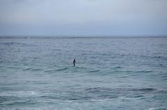 Ocean paddleboarding (afagen) Tags: california pacificgrove asilomarstatebeach montereypeninsula asilomar beach pacificocean ocean paddleboarding