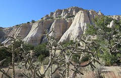 Prickly barrier (langkawi) Tags: kashakatuwetentrocks nationalmonument tent rocks newmexico