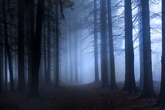 Cold desaturation (Petr Sýkora) Tags: les mlha podzim forest nature trees fog mist maddream light darkness cold