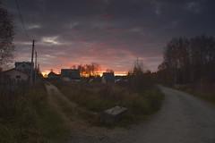 _DSC8365 (Oleg1961) Tags: nikon af 351353545 sun autumn sunset trees plants beauty