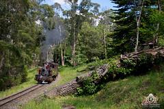 Fall (R Class Productions) Tags: steam train puffing billy railway smoke locomotive 262 narrow gauge victorian railways forest pbr 7a