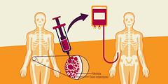 medula ossea (biologianotadez) Tags: