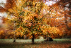 Explosion ... (Julie Greg .. Holiday 13/12 - 31/12 2018) Tags: autumn autumn2018 colours canon tree trees england park explosion nature nautre