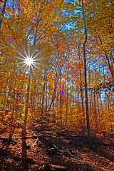 Fall Forest Sunburst (soboy5) Tags: flare sun sunburst sunstar fall foliage autumn brown orange red green yellow woods hike nature landscape velvia fuji fujifilm 18mm xt1 georgia leaf leaves leafcolor starburst zen sky blue