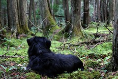 Mossy Maxx (kerstynp) Tags: moss dog bog trees green nature outside
