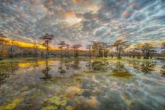 sunset clouds (FollowingNature (Yao Liu)) Tags: followingnature fallfoliage fallcolors swampcypress baldcypress cypress sunset visittexas texas caddolake bayou