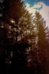 Blazing (Vanessa wuz Here) Tags: landscape sunset trees jasper jaspernationalpark lighting goldenhour
