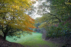 Over the hague (Greg.w2) Tags: autumn autumnal fuji england 2018 uk finepix colours tree broadbottom x100 october hague oak field