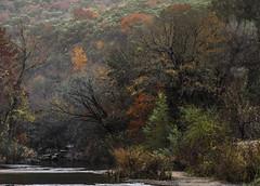 Mystical (keith_shuley) Tags: creek stream fall colors bullcreek austin texashillcountry texas
