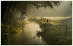 Cold november mornings (Rob Schop) Tags: sony55210oss sonya6000 light leuvenumsebos veluwe frost mood tele morning fog