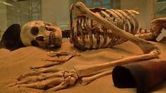 EGYPTIAN GRAVE (novaexpress93) Tags: novaexpress93 grave skeleton egyptian museum bones skull bonedry sand rip thebigsleep