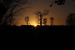 Danson Park  Silhouette Sunset (Tixvio) Tags: time canon sky silhouette welling bexley london park danson view trees nature buildings architecture lights photo image sign simple sunset