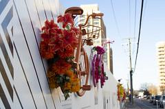 Wall Bikes (CGDana) Tags: urban city art dc metro canon 7d