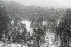 Winter is coming... (superhic) Tags: winter snow bosnia bosna blackwhite zima sneg snijeg forest suma bor