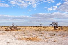 Sky Above _6200-2 (hkoons) Tags: southernafrica africa african namibia etosha pan flats desert namutoni caprivi caprivistrip wildlife grass grasses clouds