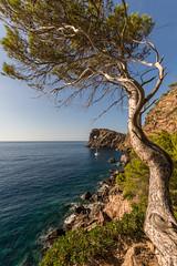 Sa Foradada hike (hjuengst) Tags: sonmarroig saforadada viewpoint aussichtspunkt mallorca majorca tree mediterraneansea mittelmeer