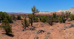 June 17, 2018-DSC_0816_J (Bert_T_TX) Tags: landscape desert utah arizona rock red moab bryce grand canyon arches sedona rocks sky blue flower sand rocky travel adventure colorado river road highway view viewpoint kodachrome colorful history old bees plants flowers arch window windows orange green