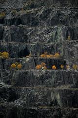 Life on the edge (PentlandPirate of the North) Tags: slate quarry dinorwig snowdonia northwales dinorwic trees buildings orange yellow grey breathtakinglandscapes