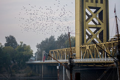 Trouble Breathing Sacramento (adrianonymous) Tags: sacramento sac river bridge westsac bicycle