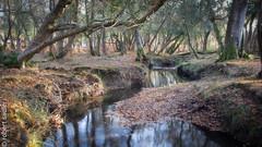 New Forest - Bratley Water-3.jpg (Robert M Sadler) Tags: 24105lf4 dorset landscape trees newforest buildingslandscape photoshopped canon autumn eos m5 eosm5 24105f4l