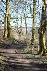 Loch Lomond (Hate In a Cage) Tags: loch lomond scotland uk nature footpath