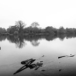 Fading Light at Hatfield Forest