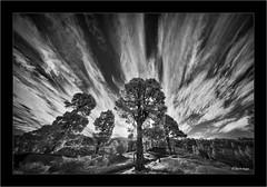 Sony A7R IR, with Laowa 10-18mm f/4.5-5.6 FE @ 10mm (Dierk Topp) Tags: a7r bw bäume himmel ilce7r ir laowa1018mmf4556fezoom sonya7rir canaryislands clouds infrared infrarot islascanarias lapalma landscapes monochrom sw sony trees wald wolken wood