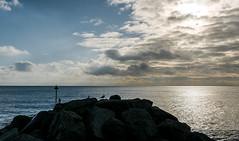 Coastal winter  (2 of 3) (+Pattycake+) Tags: eastcoast wintersky pinecone offseason 10dec18 winterseaside street clouds winter sky lumixdmcgm1 felixstowe evening uk seaside water sea blue panasonic british outdoor landscape mirrorless 43 vario1445mm