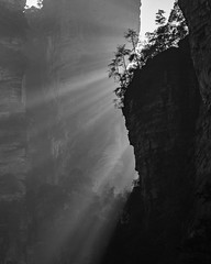 Heavenly light (Oleg S .) Tags: cliff light hunan nature tree china zhangjiajie wulingyuan
