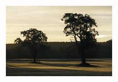 Oaks - Fuji Provia 400X (magnus.joensson) Tags: sweden swedish skåne fujica st801 carl zeiss jenna ddr 135mm fuji provia 400x e6 24x36 oak autumn october m42