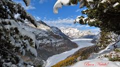 Merry X-Mas!!!  - Un Buon Natale a tutti i miei Amici di Flickr! (Felina Photography - www.mountainphotography.eu) Tags: natale weihnachten christmas aletsch glacier gletscher ghiacciaio schweiz svizzera suisse svizra switserland zwitserland wallis vallese valais aletschgletscher autunno autumn herbst herfst raron snow schnee sneeuw neve buonnatale gletsjer felinafoto felinaphotography felina photographer photography fotografia fotografie fotografo fotografa tourism turismo toerisme turismus tourismus tour trip adventure hotspot excursion escursione excursions escursioni excursie tocht uitje ausflug gita poster wallpaper alps alpi alpen mountain montagna montagne landscape landschap paysage paesaggio nature natura natuur