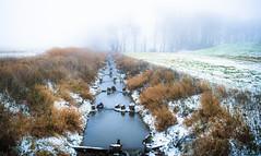 Fur collar (Ingeborg Ruyken) Tags: shertogenbosch autumn mist fall flickr snow ochtend 500pxs empel instagram empelsedijk sneeuw fog morning koornwaard natuurfotografie herfst