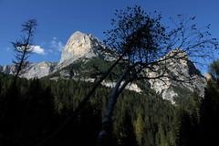 Difficile (lincerosso) Tags: montagna dolomiti alberi trees paesaggio mountainscape bellezza armonia adattamento