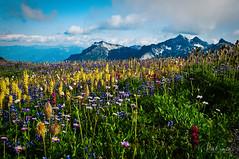 Rainier Wildflowers (Photocalvi) Tags: 2009 500px mtrainier mtrainiernationalpark photovia applepie landscape logo mountains