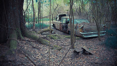forgotten stories (Mr. Greenjeans) Tags: oldcar abandoned woods decay tree spooky 1959desoto dodgedesoto vintage
