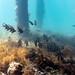 Flinders Pier Underwater-24