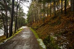 2019 2-1-5b Glendalough woods (MJMPHOTOS.IE) Tags: 2019 feb february winter snow lakes woods hills landscapes countywicklow tamron1530 sonya7iii martinjmurphyphotography