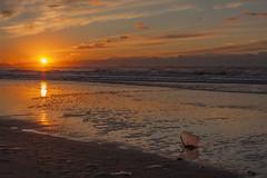 Zonsondergang - Strand - 's-Gravenzande (Jan de Neijs Photography) Tags: sgravenzande zonsondergang westland hetwestland strand beach sea noordzee zee zuidholland zuidhollandslandschap reflection weerspiegeling sun zon northsea holland nederland thenetherlands landschap landscape landshaft zand sunset dieniederlande southholland rood red nationaalparkhollandseduinen reflectie hoekvanholland hvh emmer bucket