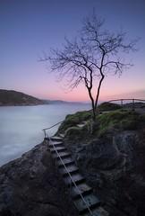 Steps to Dawn (Captain Nikon) Tags: babbacombe devon southwest coast coastal lonetree dawn silhouette steps england longexposure